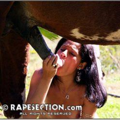 Zoo foto лакомится спермой жеребца на лужайке