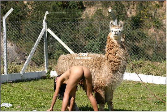Симпатичная лама смотрит как дрочит зоофилка фото зоо порно