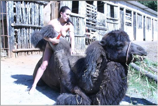 Развратная тварелюбка трется пиздой об горб верблюда уникальное зоо порно фото